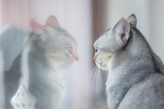 Пять зеркальных принципов и пять зеркал отношений