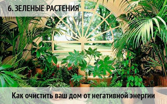 как очистить дом от негатива и поставить защиту: растения