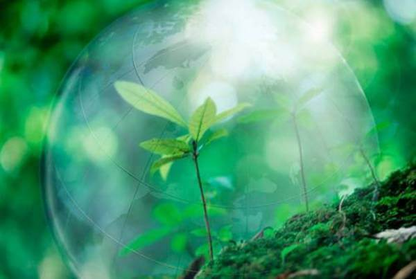 Природа как инструмент, позволяющий повысить вибрации человека