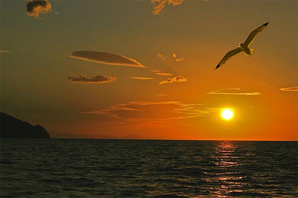 Не хватает энергии: Приучите себя вставать вместе с солнцем.