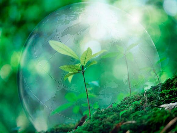 Природа как инструмент повышения вибрации на физическом уровне