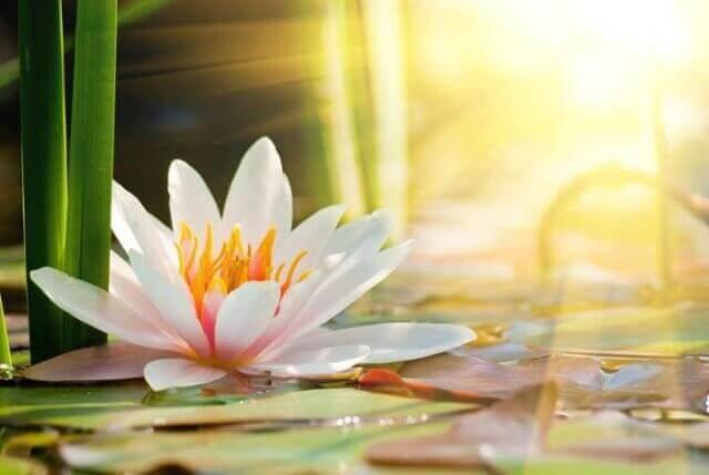 Как защитить себя, находясь среди людей: Общие рекомендации по сохранению гармоничного состояния