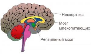 triune_brain